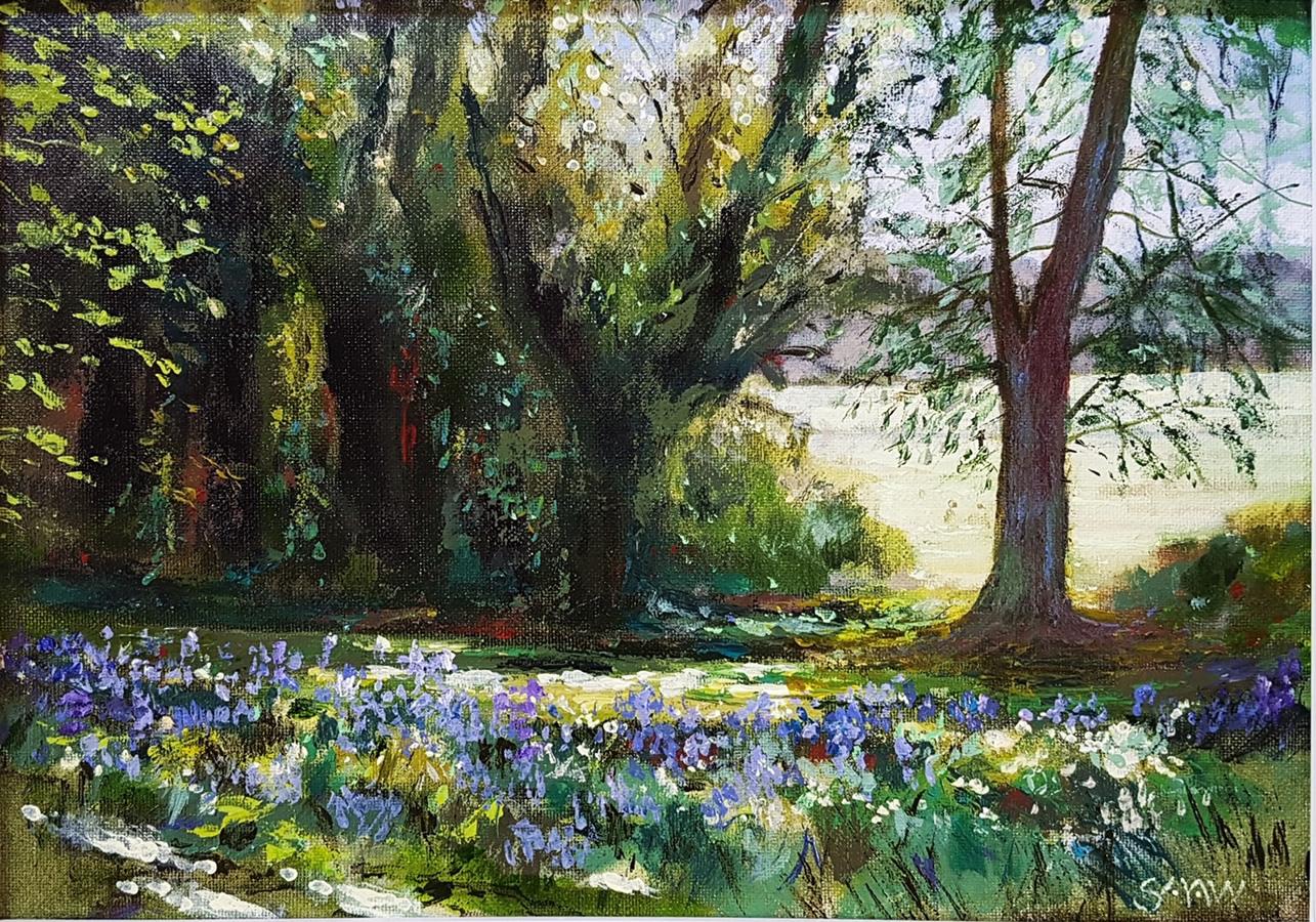 Bluebells at Malahide - Robert Shaw